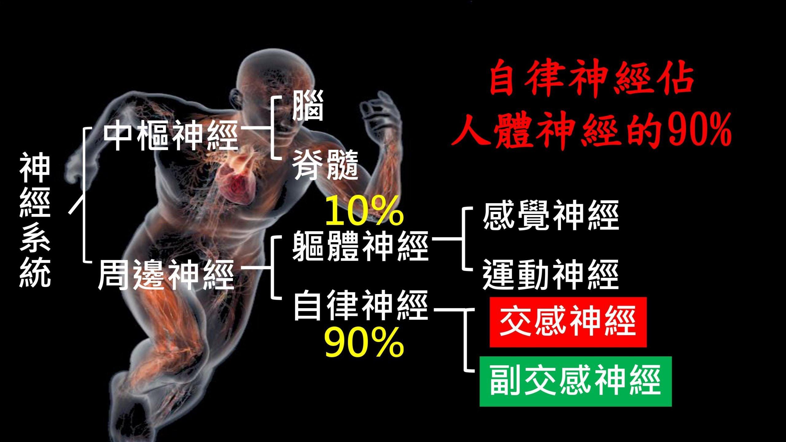 HRV心律變異自律神經檢查